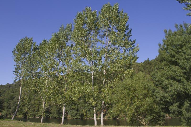 Bäume am Fluss lizenzfreies stockfoto