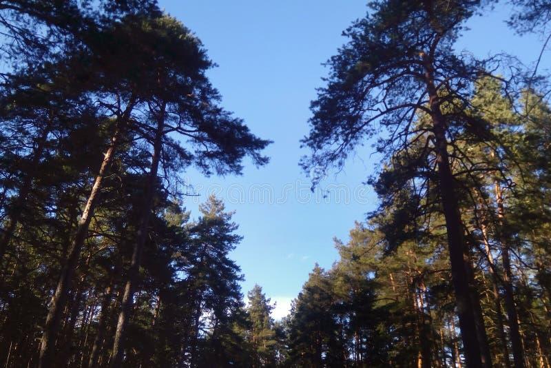 Bäume in Form des Herzens stockbilder