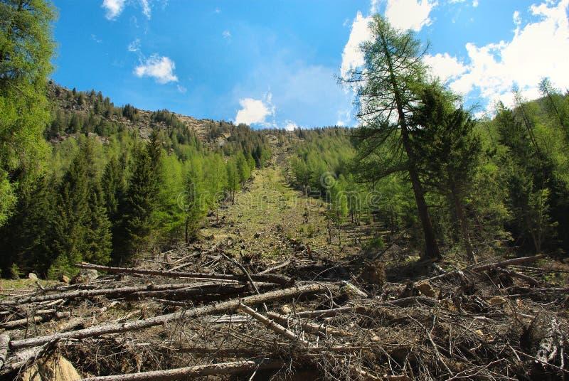 Bäume gefällt durch Lawine lizenzfreies stockbild