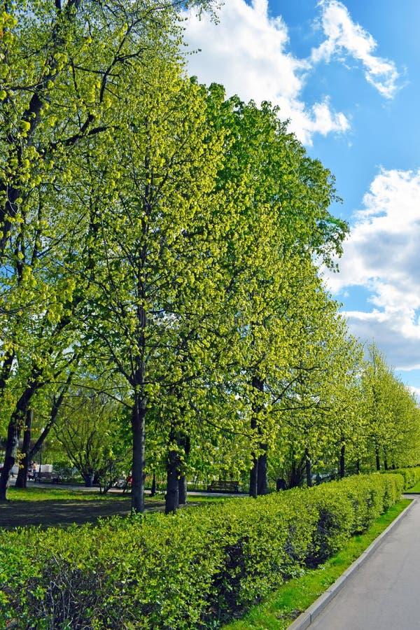 Bäume, getrimmte Büsche und Straße stockfoto