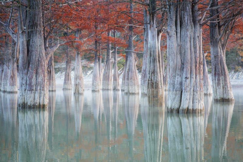 Bäume Groves Zypresse in Sukko-Fall lizenzfreies stockfoto