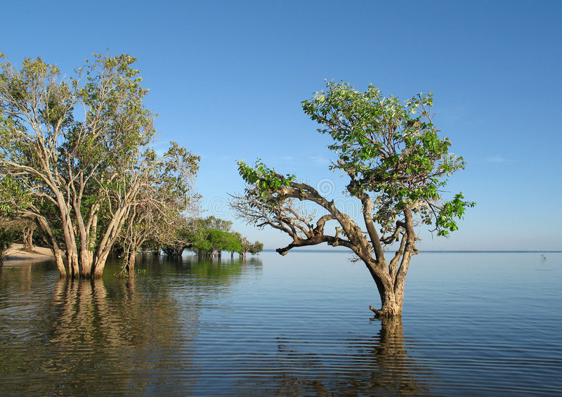 Bäume im Amazonas-Fluss lizenzfreie stockbilder