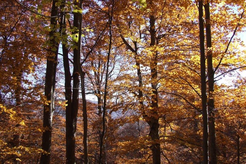 Bäume im Feuer lizenzfreie stockfotografie