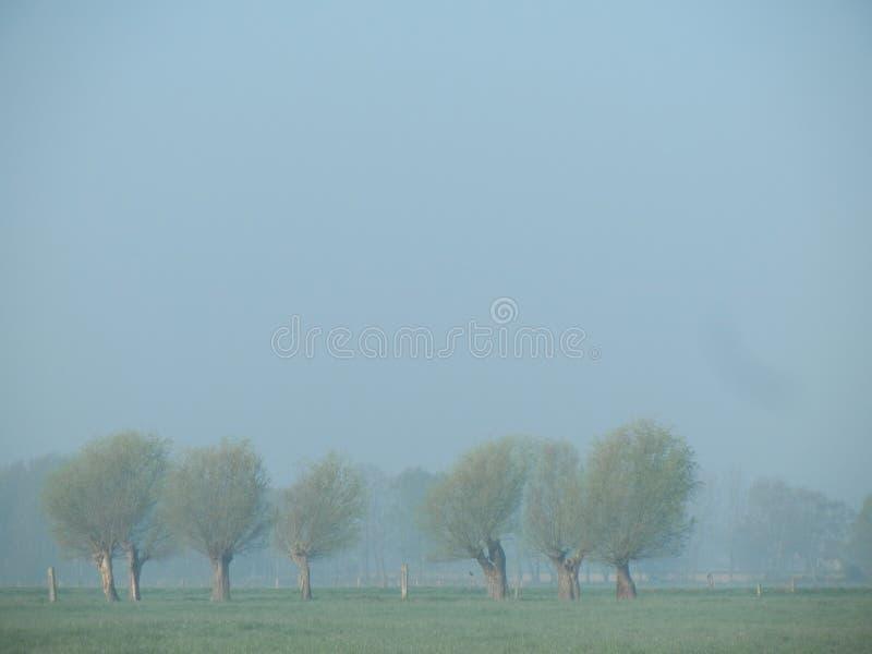 Bäume im Frühjahr am Niederrheinbereich lizenzfreie stockbilder