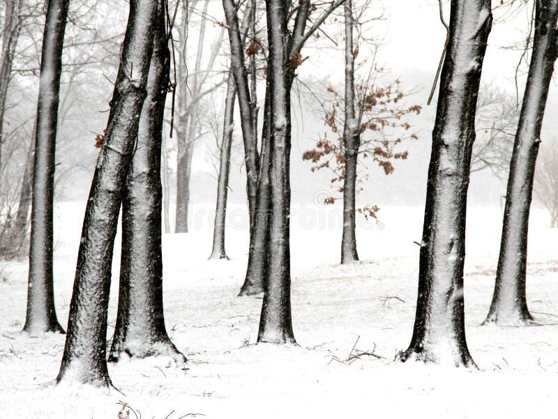 Bäume im frischen Schnee lizenzfreie stockfotos