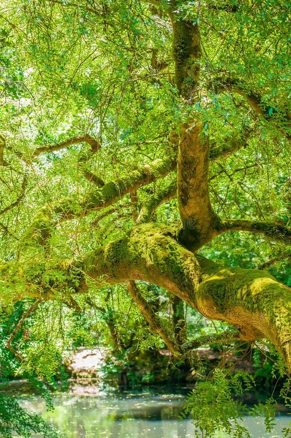 Bäume im Garten lizenzfreie stockfotos