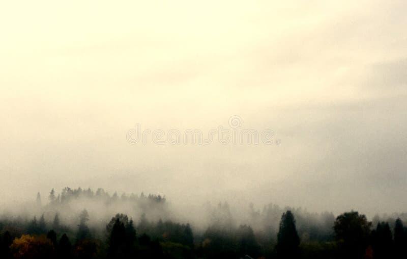 Bäume im Nebel lizenzfreie stockfotografie