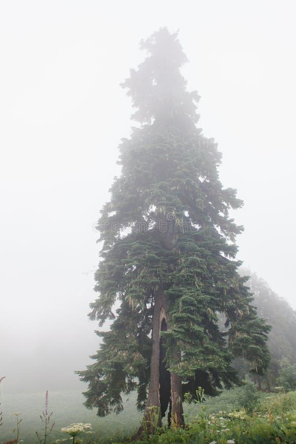 Bäume im Nebel stockfoto