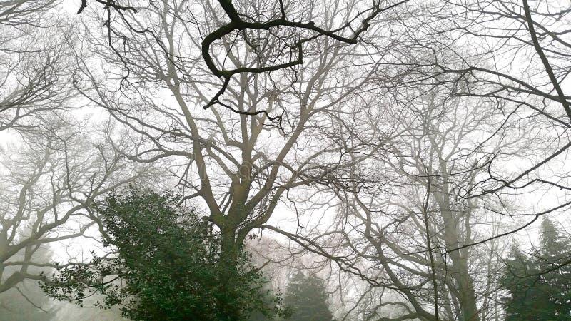 Bäume im Nebel lizenzfreie stockbilder