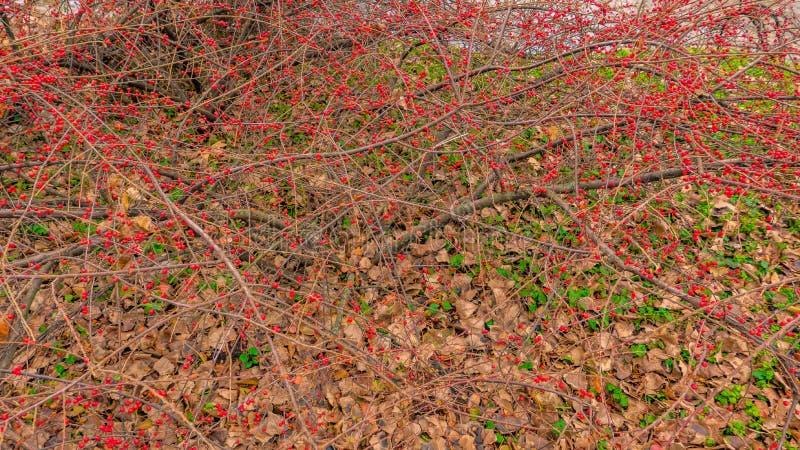 Bäume im Park im Herbst lizenzfreie stockfotografie
