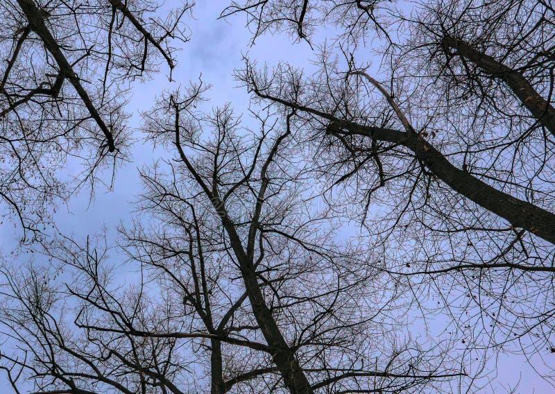 Bäume im Park im Herbst stockfoto