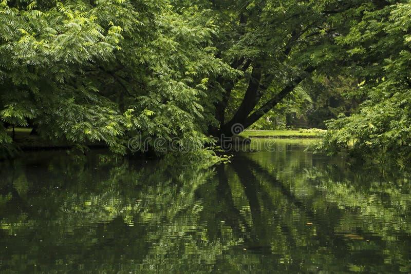 Bäume im Park reflektiert im Teich stockfotos