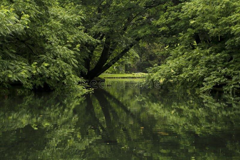 Bäume im Park reflektiert im Teich stockbild