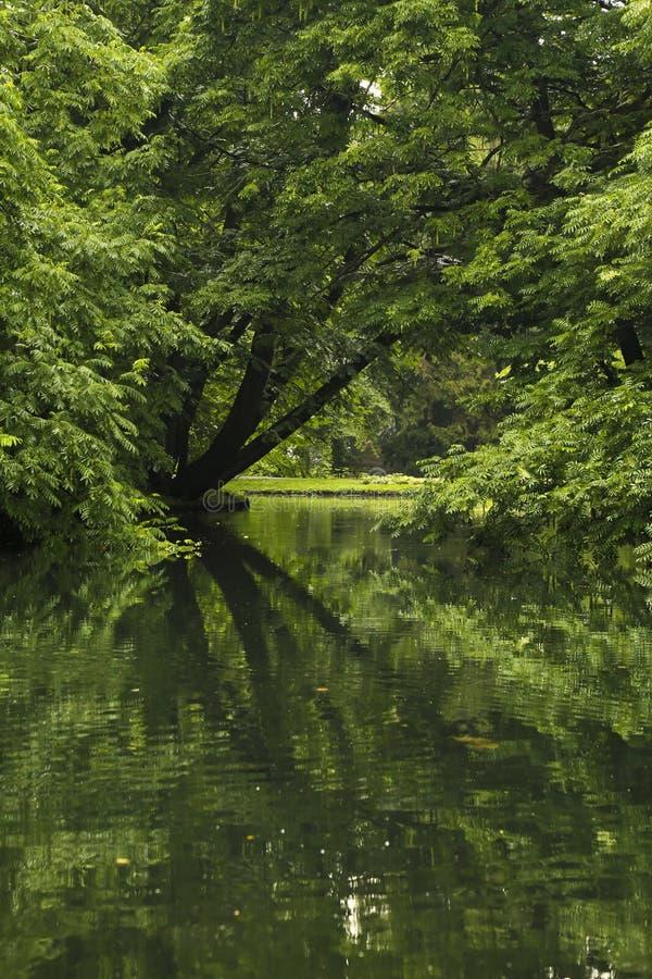 Bäume im Park reflektiert im Teich lizenzfreie stockbilder