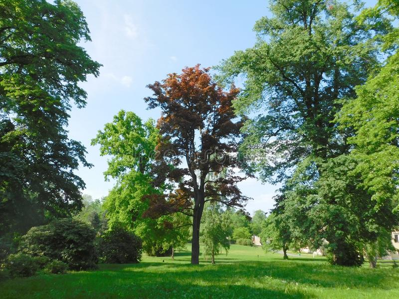 Bäume im Park am sonnigen Tag lizenzfreies stockfoto