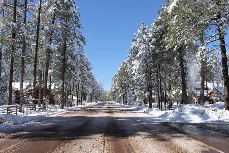Bäume im Schnee lizenzfreie stockfotos