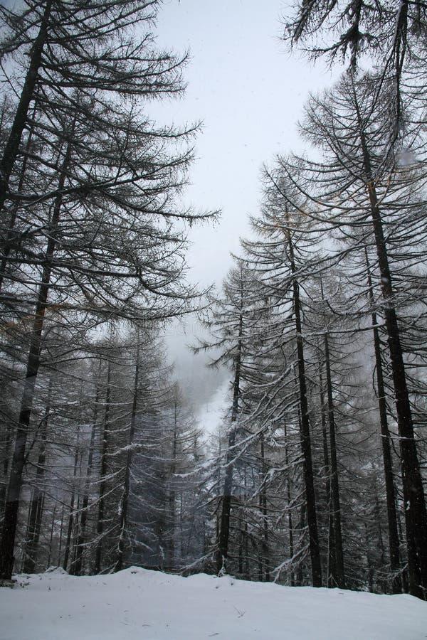 Bäume im Schnee stockbilder