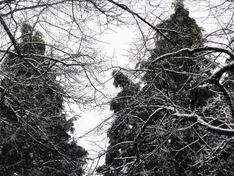 Bäume im Schnee lizenzfreies stockfoto