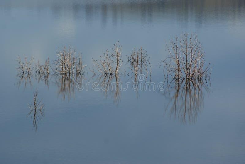 Bäume im See Eucumbene lizenzfreie stockbilder