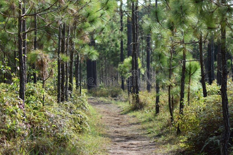 Bäume im Wald stockfotografie
