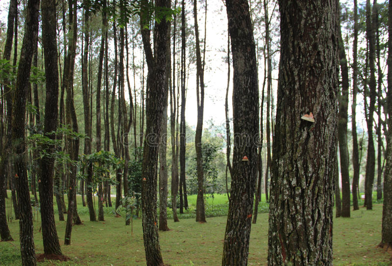 Bäume im Wald lizenzfreies stockbild