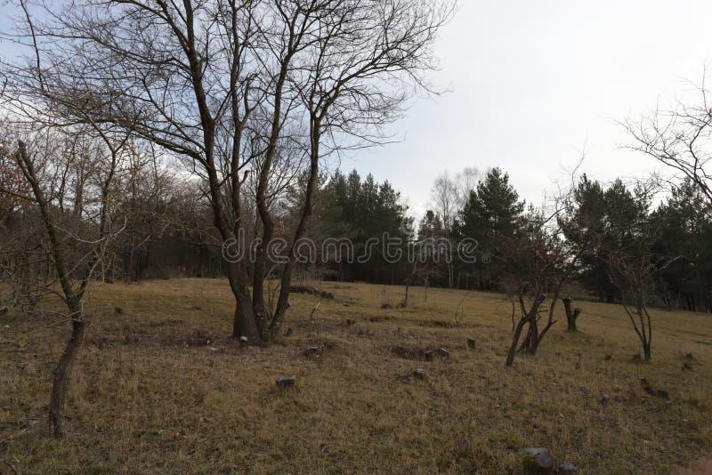 Bäume im Winter stockfotos