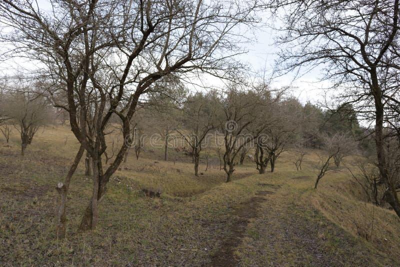 Bäume im Winter lizenzfreies stockfoto
