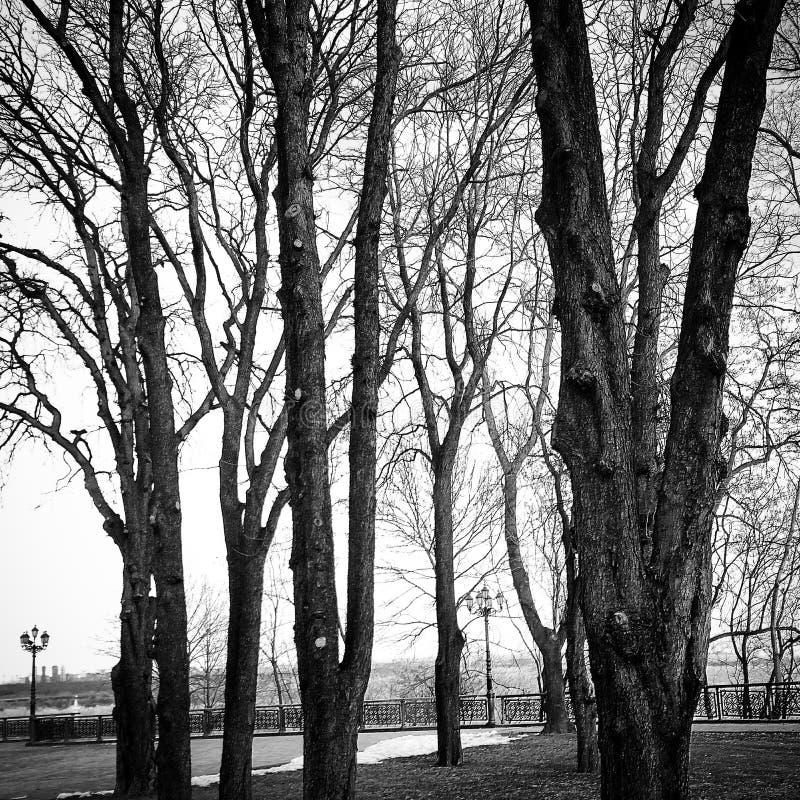 Bäume in Kiew lizenzfreies stockbild