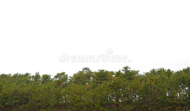 Bäume lokalisiert auf weißem Hintergrund Grünpflanzen arbeiten Park im Garten lizenzfreie stockfotos