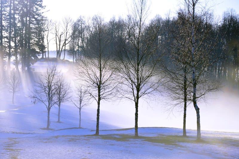 Bäume in Mist am frostigen Wintertag lizenzfreie stockbilder