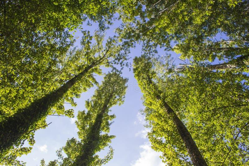 Bäume mit Blick auf den Himmel lizenzfreie stockfotografie