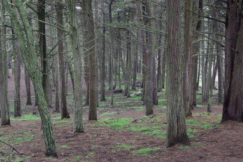 Bäume mit einer Bahn lizenzfreie stockfotos