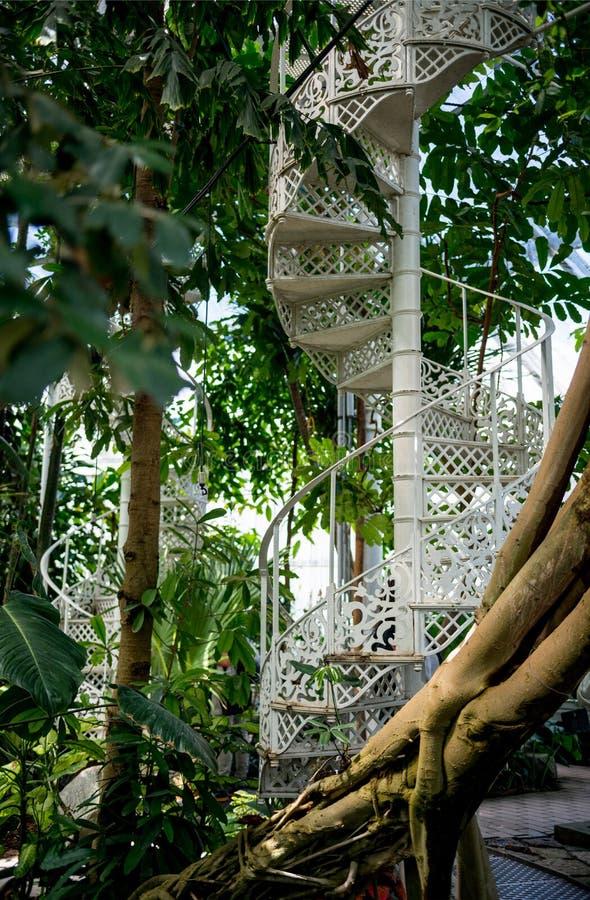 Bäume mit grünen Blättern und Wendeltreppe im botanischen Garten von stockbilder