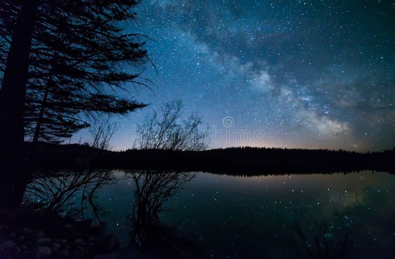Bäume mit Milchstraße stockfotos