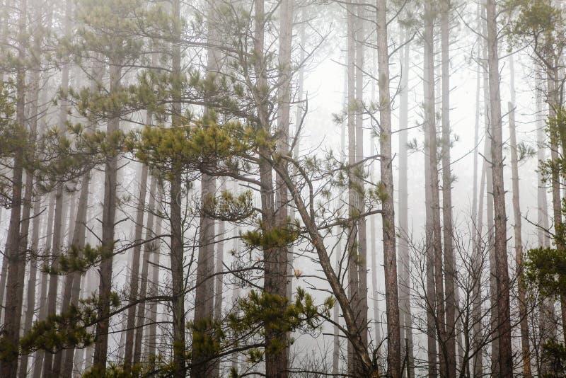 Bäume mit Nebel und Nebel Horrornatur lizenzfreie stockfotos
