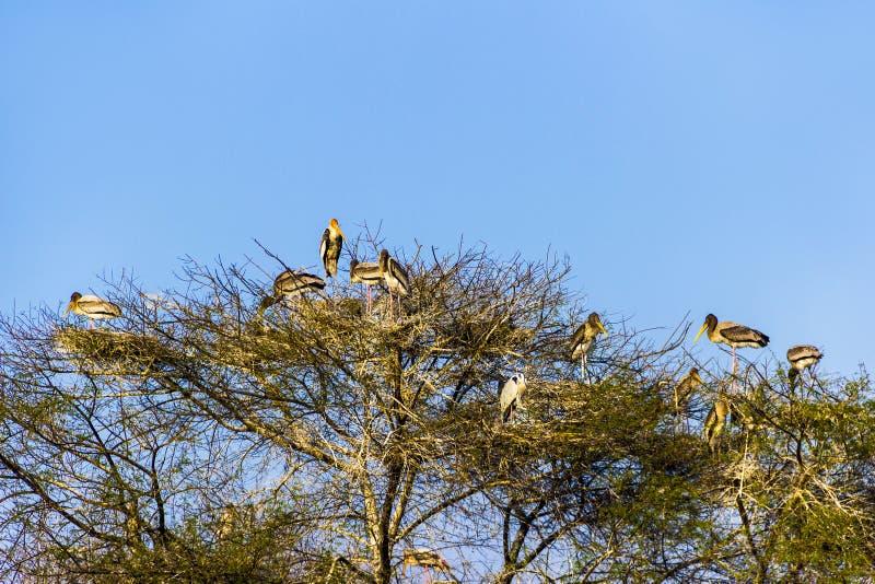 Bäume mit Reihern im Nationalpark Keolado lizenzfreies stockfoto