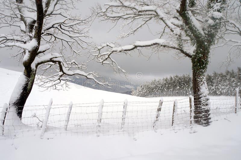 Bäume mit Schnee stockfotos