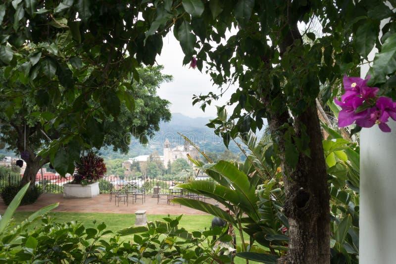 Bäume mit Stadt im Hintergrund, Xochimilco, lizenzfreie stockfotos