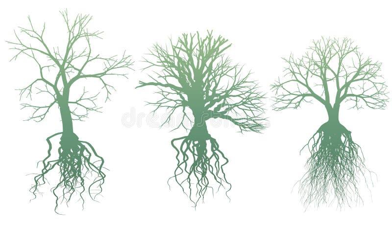 Bäume mit Wurzeln vektor abbildung