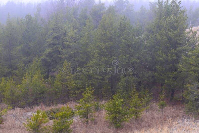 Bäume am Muskegon-Nationalpark lizenzfreie stockbilder