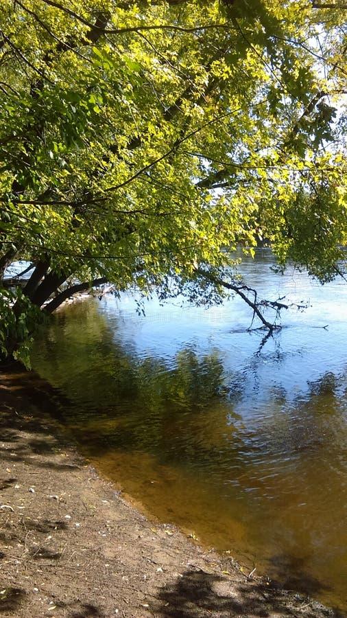 Bäume nähern sich See Mississippi in Fridley, Minnesota lizenzfreies stockbild