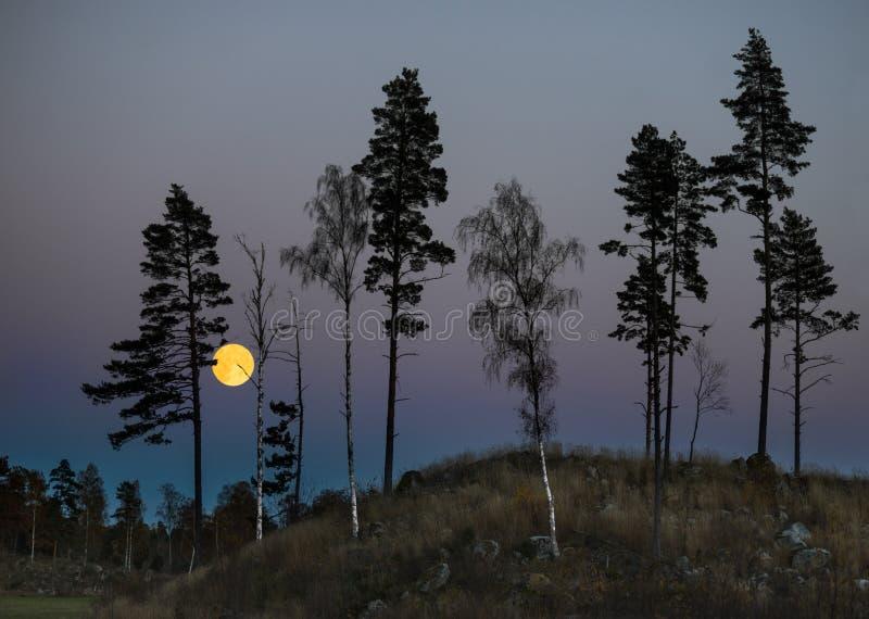 Bäume nachts mit Vollmond stockfotografie