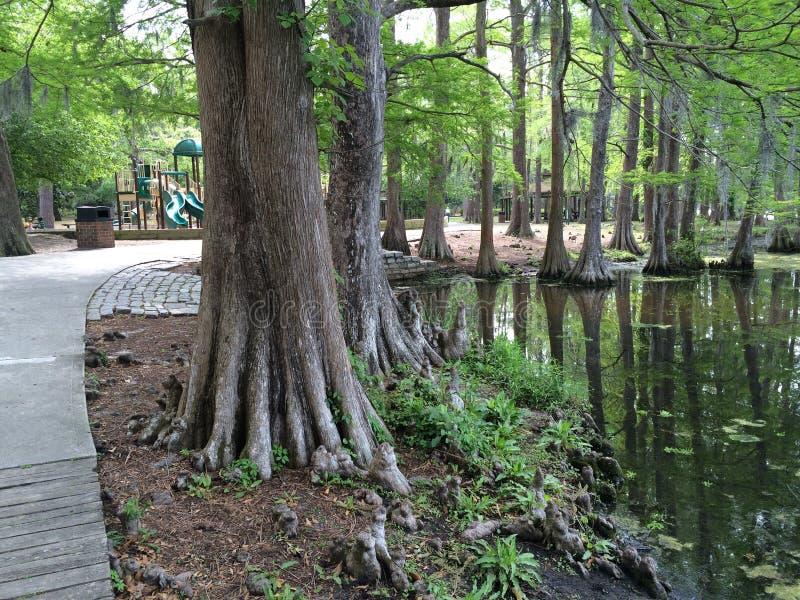 Bäume nahe dem Wasser und dem Schlamm lizenzfreies stockbild