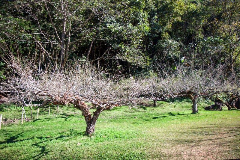 Bäume ohne Blätter auf dem grünen Gras stockbild