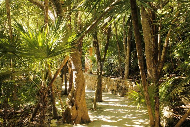 Bäume, Palmen und Schatten bei Xcaret lizenzfreie stockfotos