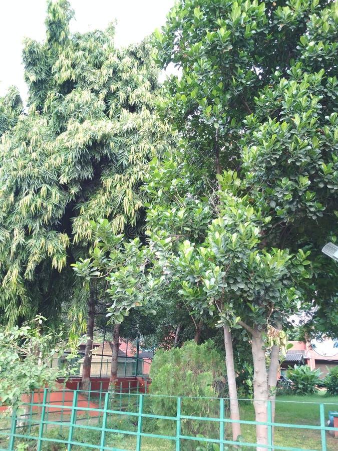Bäume sicherten in einer Grenze lizenzfreie stockfotos
