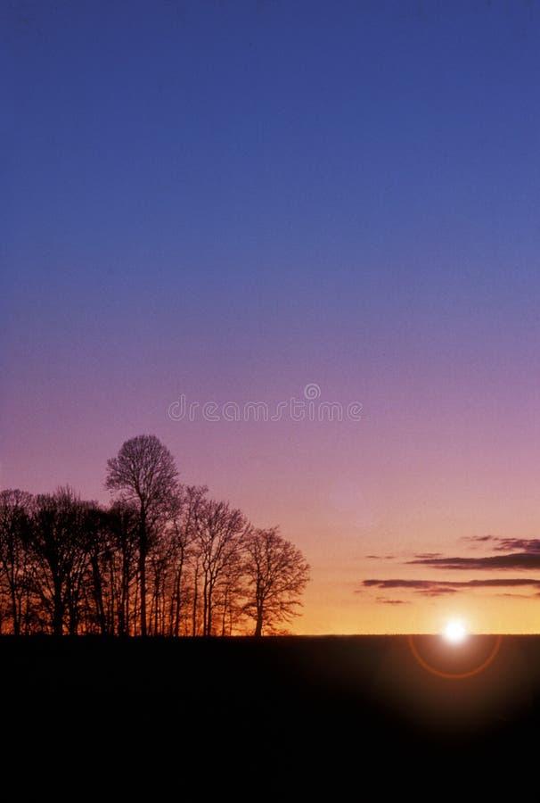 Bäume am Sonnenuntergang stockfotos