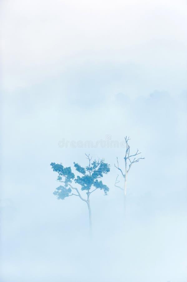 Bäume tot und lebendig im Nebel lizenzfreie stockfotos