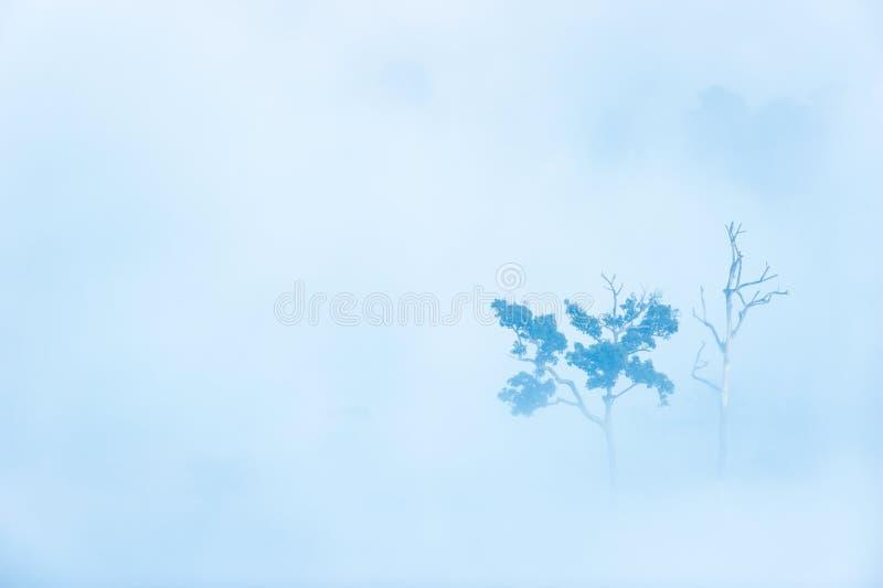 Bäume tot und lebendig im Nebel lizenzfreie stockfotografie