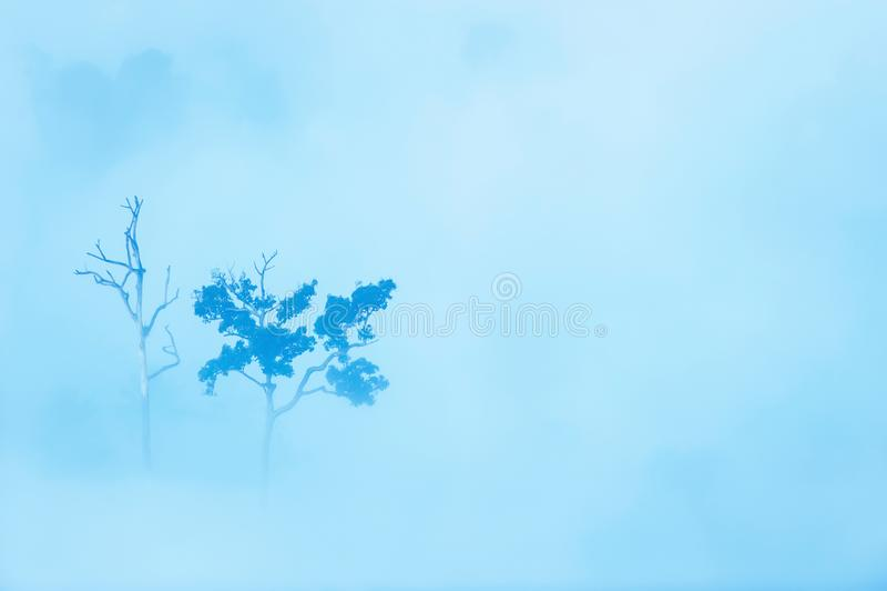 Bäume tot und lebendig im Nebel stockfotos
